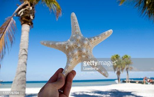 StarFish landscape