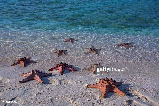 Starfish on a tropical beach, Beitung Island, Indonesia