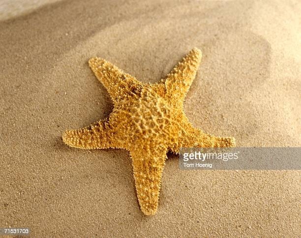 Starfish on beach, close-up