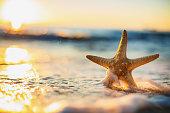 Sea Starfish on the beach at sunrise