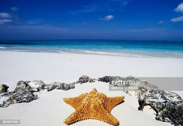 Starfish on the beach The Bahamas