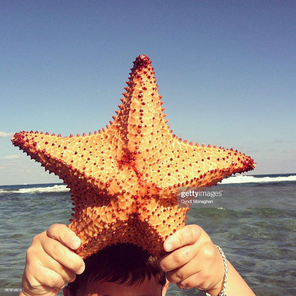 Starfish : Stock Photo