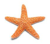 Sinlge Real Orange Starfish Isolated on White Background.