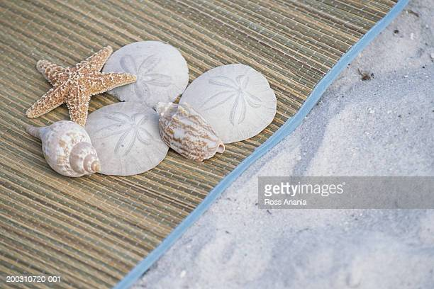 Starfish, shells, and sand dollars on beach mat in sand, elevated view
