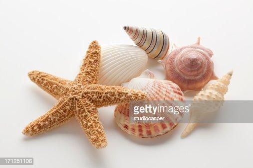 Starfish & Shells