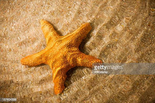 Starfish under water