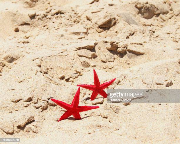 Starfish walking on the sand of the beach