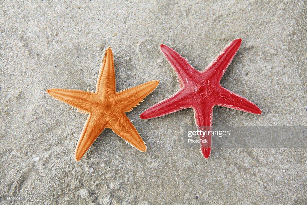 Starfish - XXXLarge