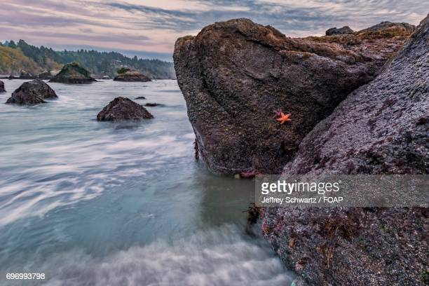 Starfishes on rock in sea