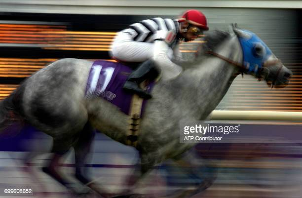 Starine heads for the finish line with jockey John Velazques in the saddle in the Breeders' Cup Filly Mare Turf race 26 October 2002 at Arlington...