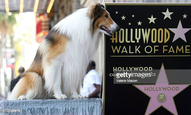 Starlet Lassie attends the Bill Geist Hollywood Walk Of Fame Induction Ceremonyon April 15 2011 in Hollywood California