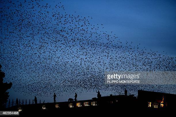 Starlings fly in the sky of Rome at sunset on January 27 2015 AFP PHOTO / FILIPPO MONTEFORTE
