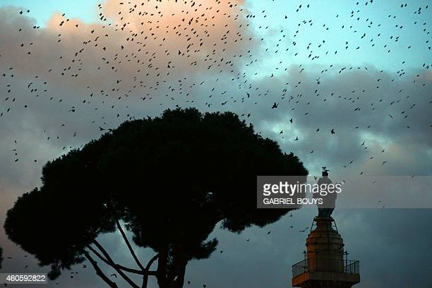 Starlings migrating from northern Europe fly in the sky of Rome with the Trajan's Column in the background on December 17 2014 About onemillion...