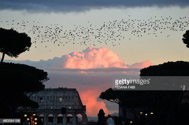 Starlings migrating from northern Europe fly in the sky of Rome with the Colosseum in the background on December 17 2014 at sunset About onemillion...