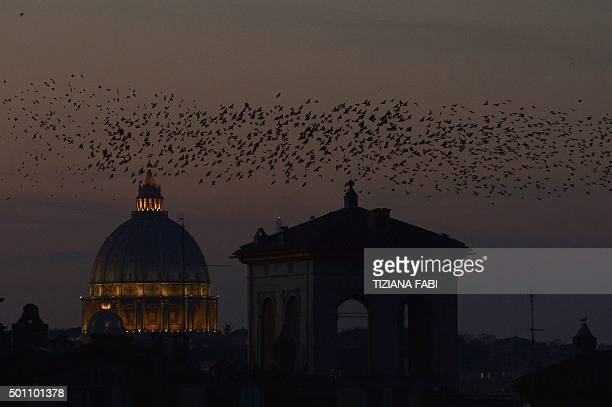 Starlings migrating from northern Europe fly near St Peter's basilica in Rome on December 12 2015 About onemillion starlings migrate in Rome during...