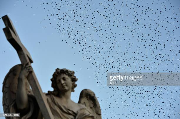 Starlings migrating from northern Europe fly over Rome on November 6 2012 About a million starlings migrate in Rome during autumn and winter time and...
