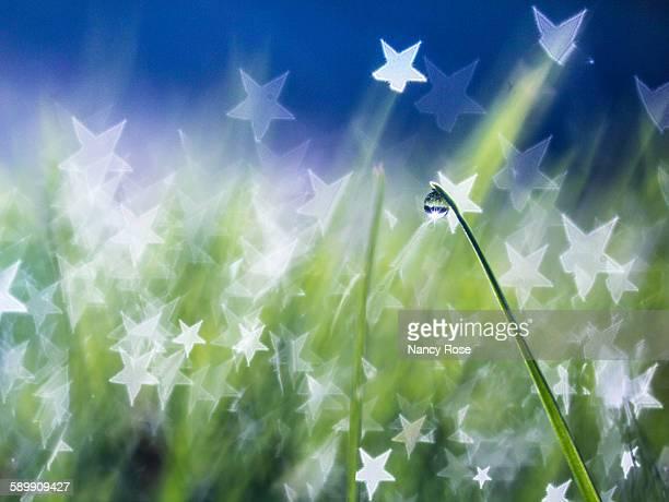 Starry dewdrop sparkles