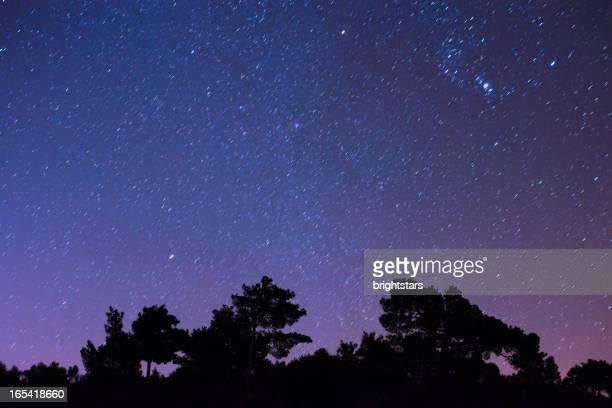 Sternenhimmel Landschaft im Wald