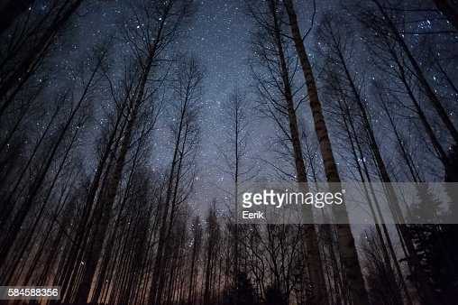 Stars above treetops : Stock Photo
