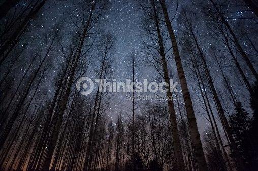 Stars above treetops : Stock Photo