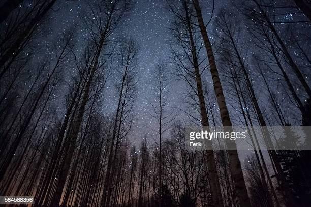 Étoiles au-dessus de la forêt