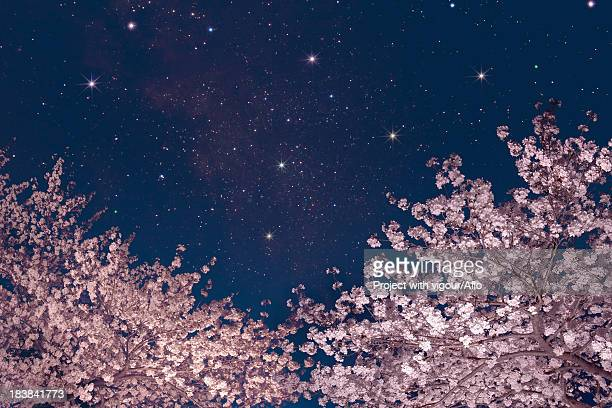 Stars and cherry blossoms
