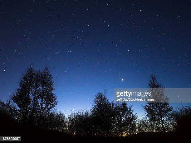 Stars Corona Borealis and Arcturus shining above the trees as twilight fades to darkness.
