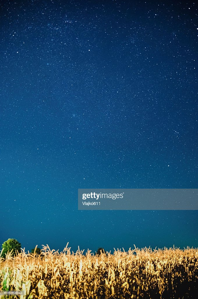 Stars on the night sky over the cornfield : Stock Photo