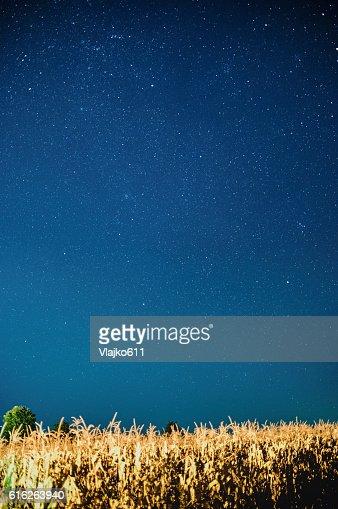 Stars on the night sky over the cornfield : Stock Photo
