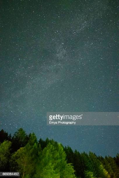 Stars over the trees
