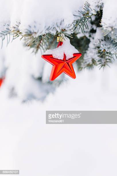 Star-shaped christmas bauble hanging on evergreen tree
