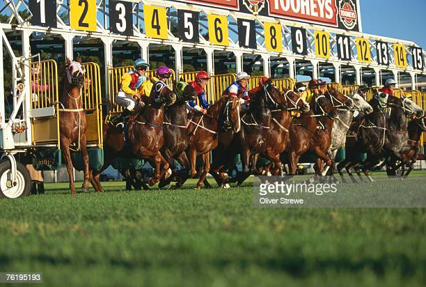 Start of horse race, Sydney, New South Wales, Australia, Australasia