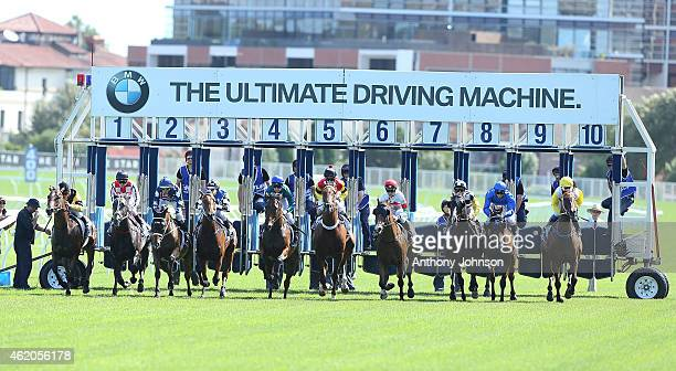 Start of race 6 during Sydney Racing at Royal Randwick Racecourse on January 24 2015 in Sydney Australia