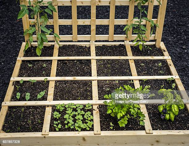 Starting a square-foot garden
