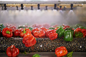 Shot of green and red peppers passing under sprinklers while on a conveyor belt in a processing plant
