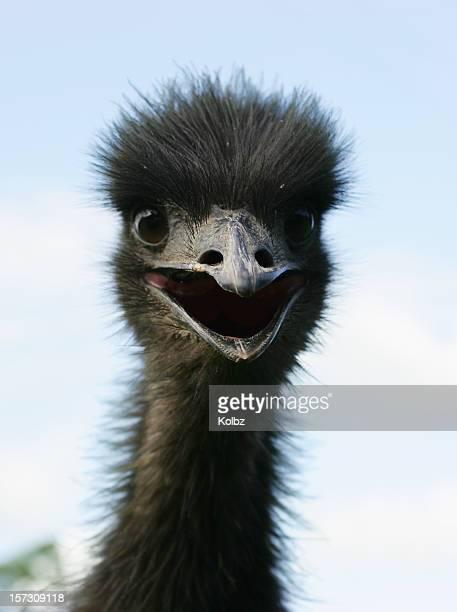 Startled Emu