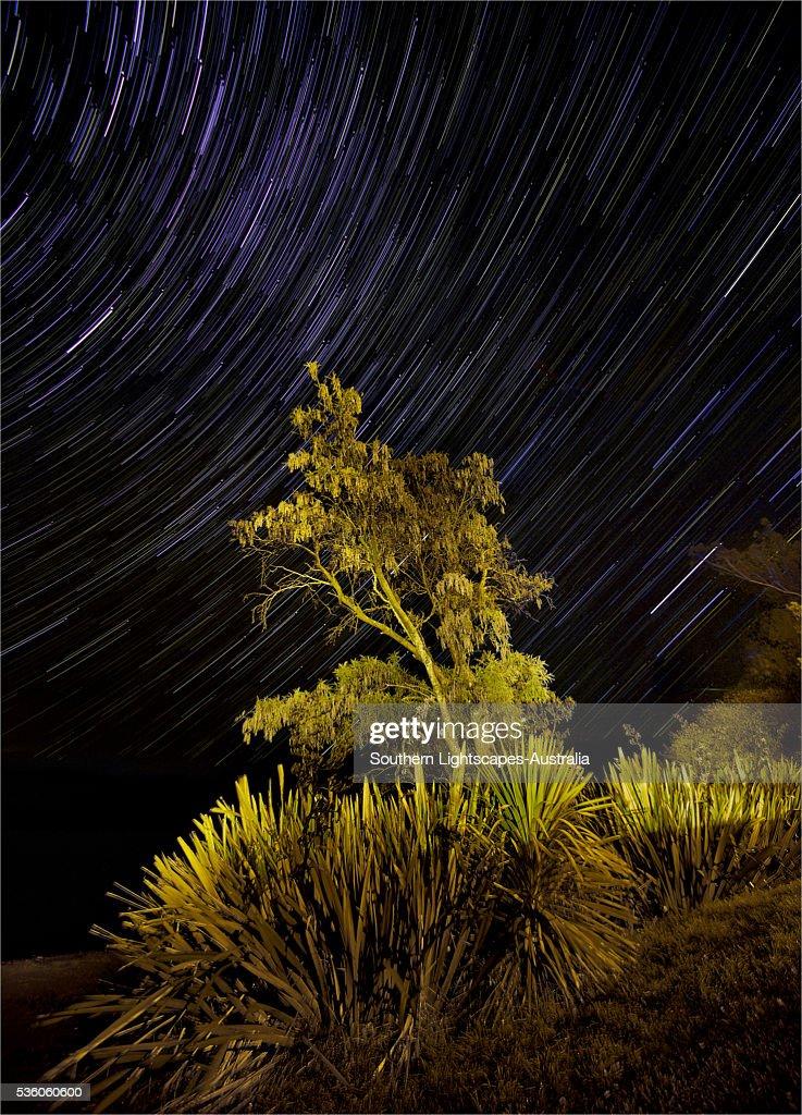 Star-trails at Te-Anau, South Island, New Zealand