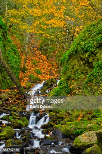 Starvation Creek Falls in autumn, Columbia Gorge, Oregon, USA