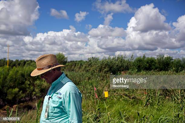 A state official visits a United States Department of Agriculture pilot eradication program for the carrizo cane plant in Starr County Texas US on...