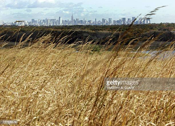 The Manhattan skyline is seen in the background of tall grass at what will be New York's new parkland at Fresh Kills landfill in Staten Island New...