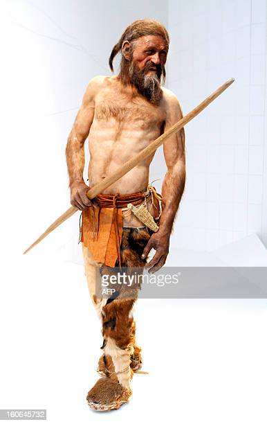 A statue representing an iceman named Oetzi discovered on 1991 in the Italian Schnal Valley glacier is displayed at the Archaeological Museum of...