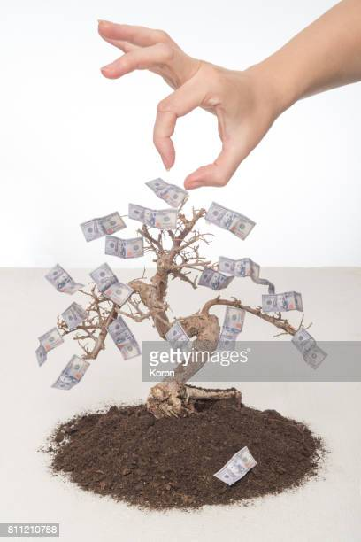 Stealing Money on a Tree