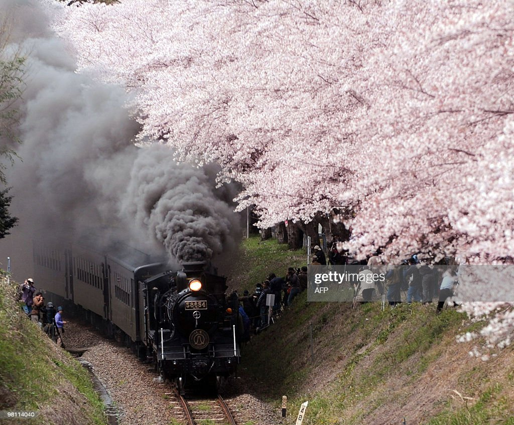 A steam locomotive passes under fully bloomed cherry blossoms at Hitoyoshi city in Kumamoto prefecture Japan's southern island of Kyushu on March 27...