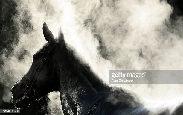 Steam rises from a runner after finishing at Kempton Park racecourse on November 24 2014 in Sunbury England