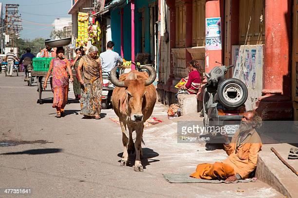 Steer and beggar on road