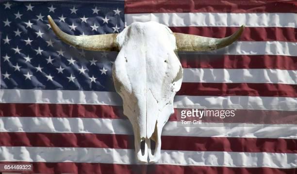 Steer Skull and American Flag