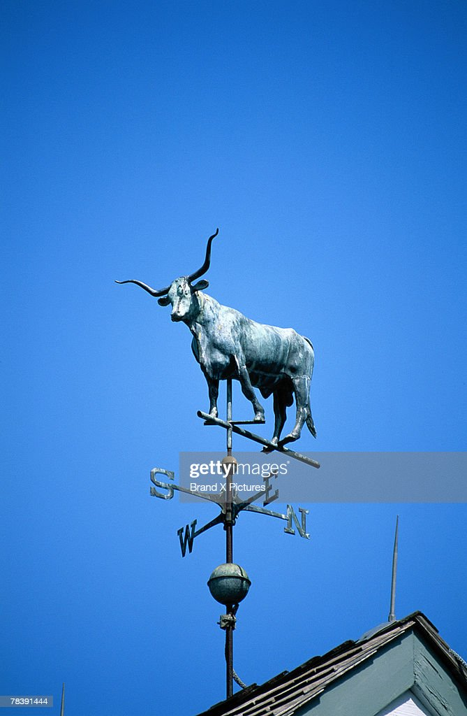 Steer weather vane : Stock Photo