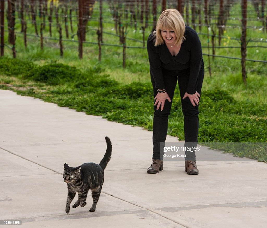 Stella, the winery cat at Inman Family Wines, plays hard to get with owner Kathleen Inman on March 15, 2013, near Santa Rosa, California. Sonoma County, along with Napa Valley, has grown to become one of California's most prestigious wine grape growing regions and known for its cool climate pinot noir and chardonnay.