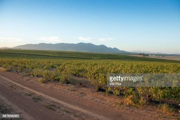 Stellenbosch South Africa South African farm land and vineyards