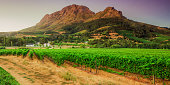 Vineyards and Helderberg Mountain near Stellenbosch at sunset, Western Cape,